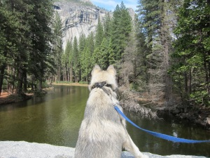Yosemite_SpringBreak_0339