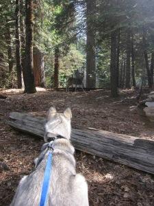 Yosemite_SpringBreak_0358