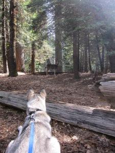 Yosemite_SpringBreak_0360