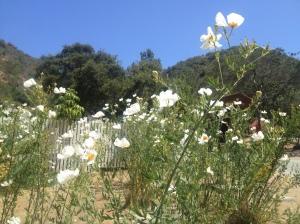 Catalina_Trip_0018