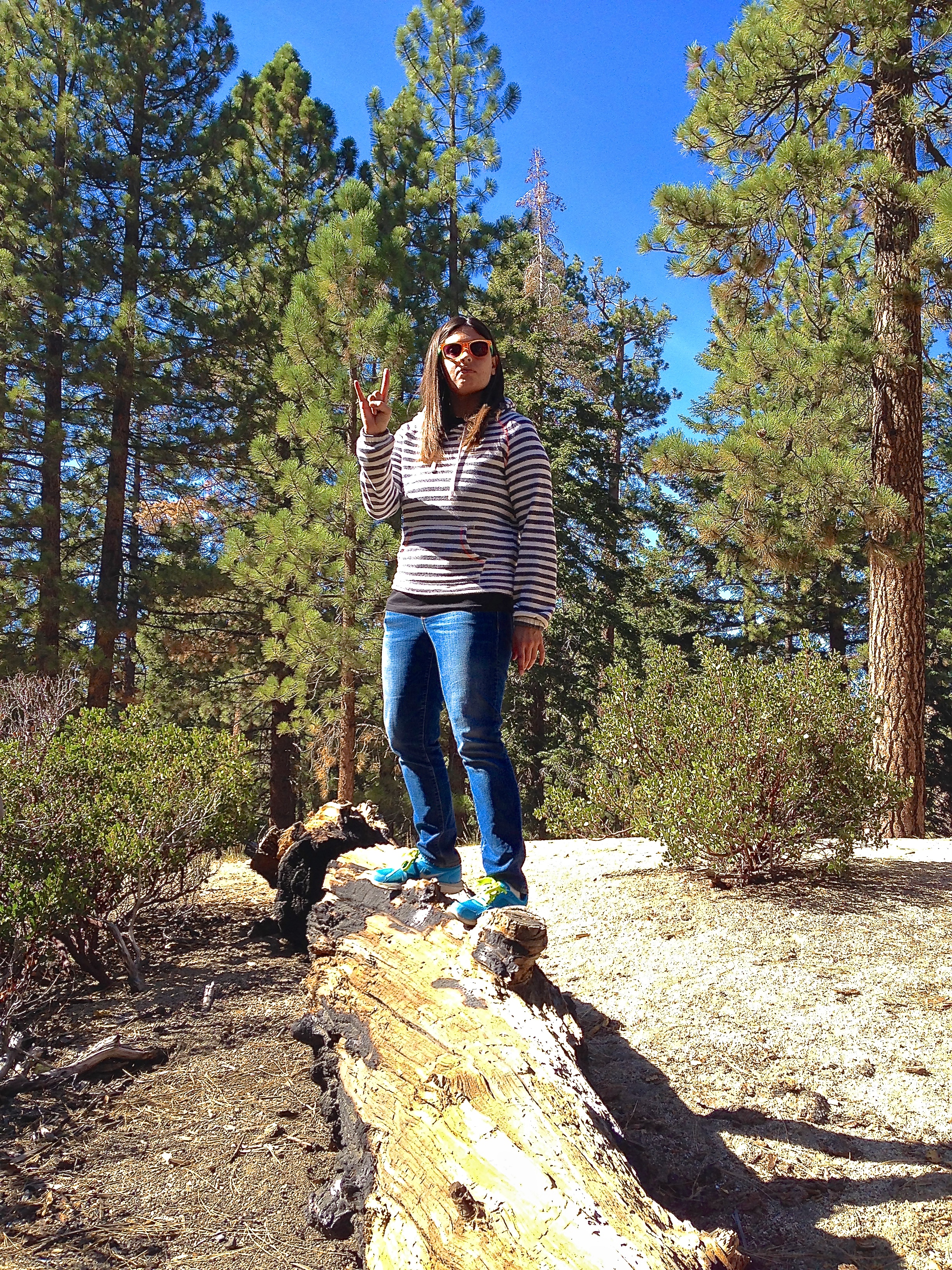 Best Big Dogs >> Camping in Big Bear With Your Dog | The OC Barkyard