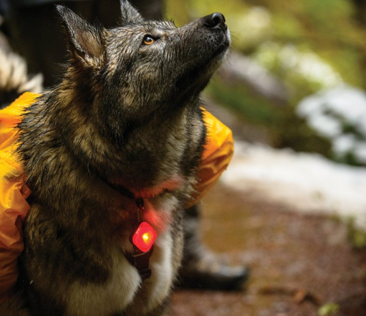 ruffwear light 1
