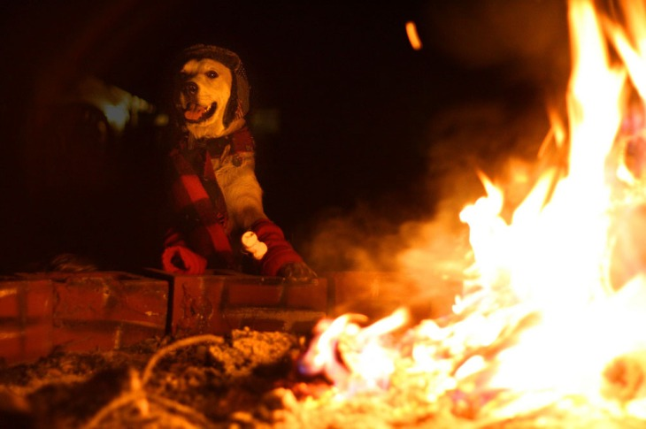 Bonfire-Dog_5219420449_l