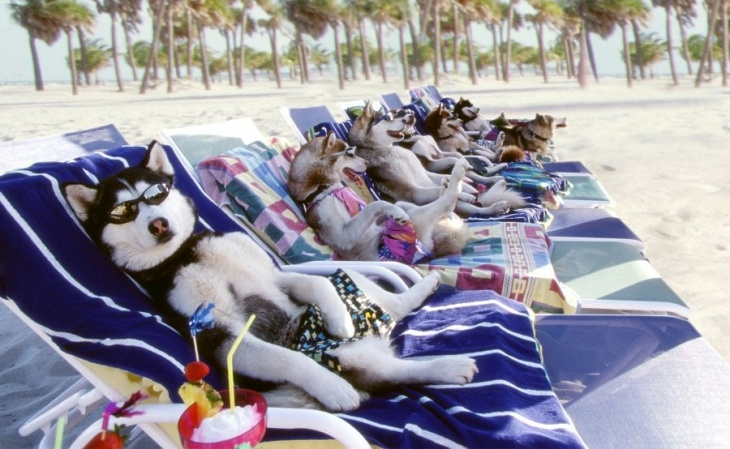 sunbathing-dogs