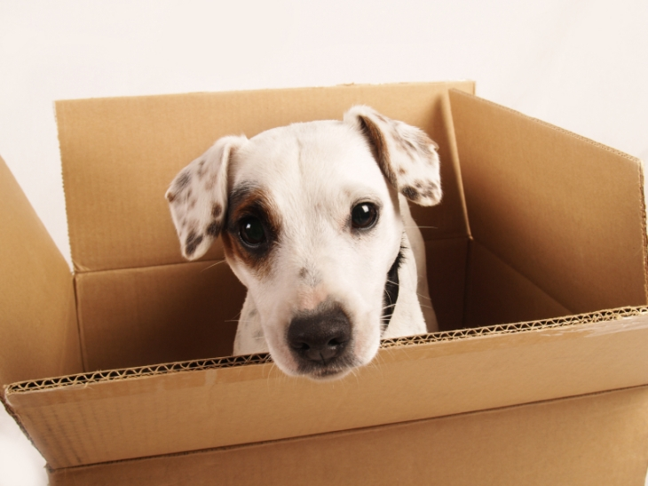 moving-with-pets-2
