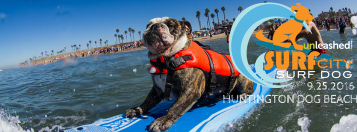 surf-city-surf-dog