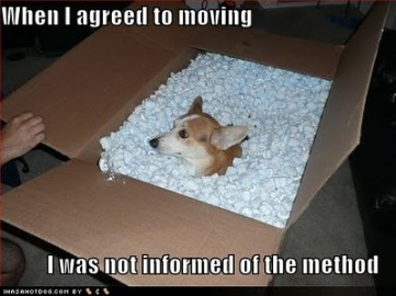 funny-dog-pictures-agreed-to-moving