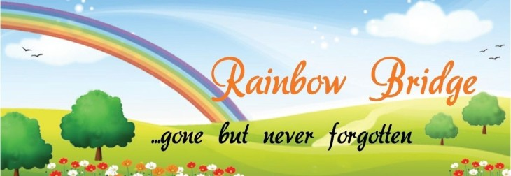 rainbow_bridge_poem_bookmark-1195x414 (1)
